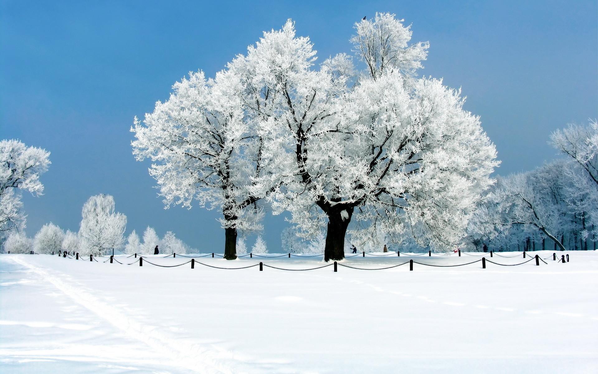 Snow Desktop Backgrounds | Winter Snow Desktop Wallpapers | Desktop .