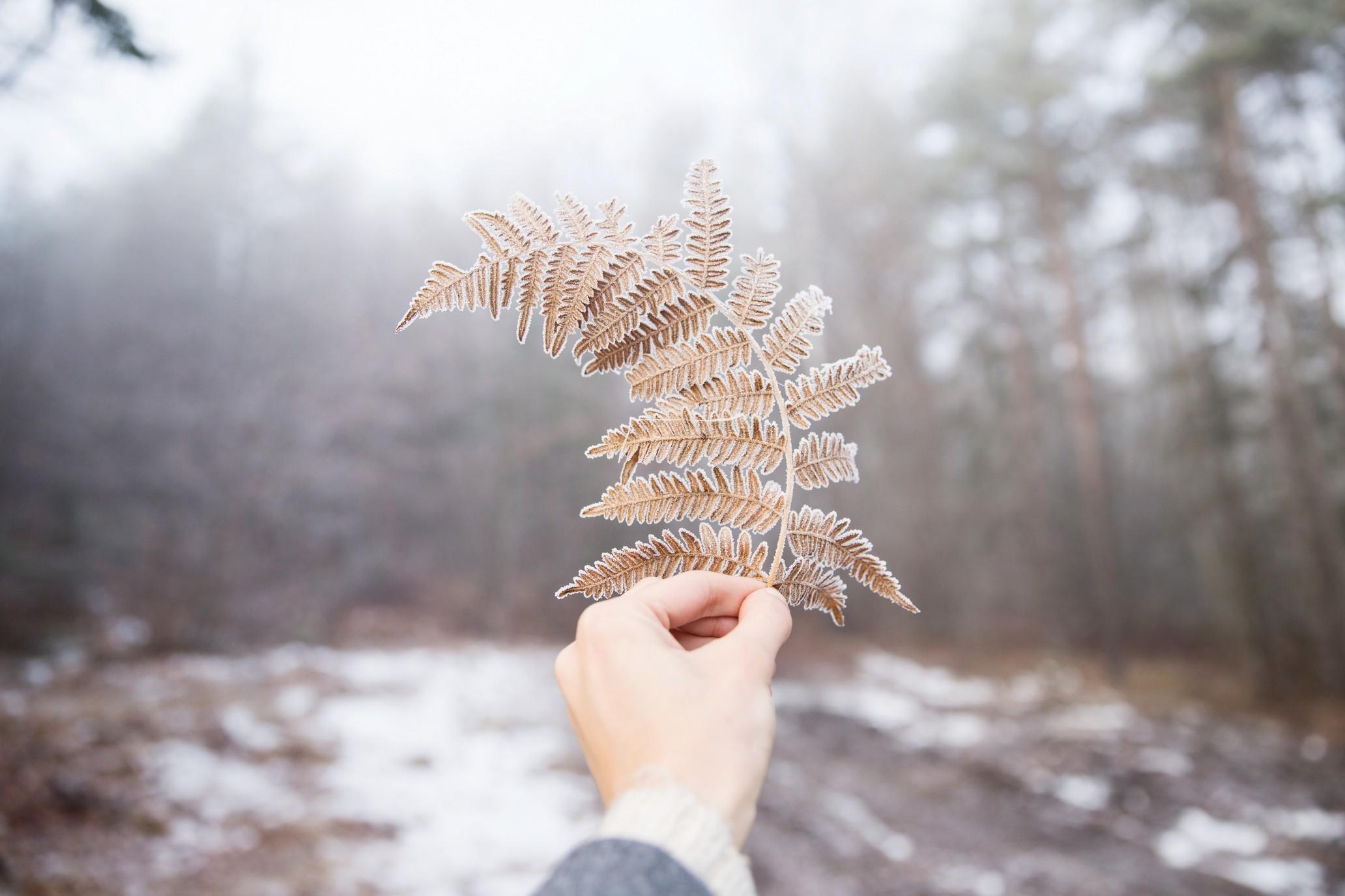 Blue Spruce Winter Snow Desktop Wallpaper. 1740 193. 1146 110 1  pixels. Download