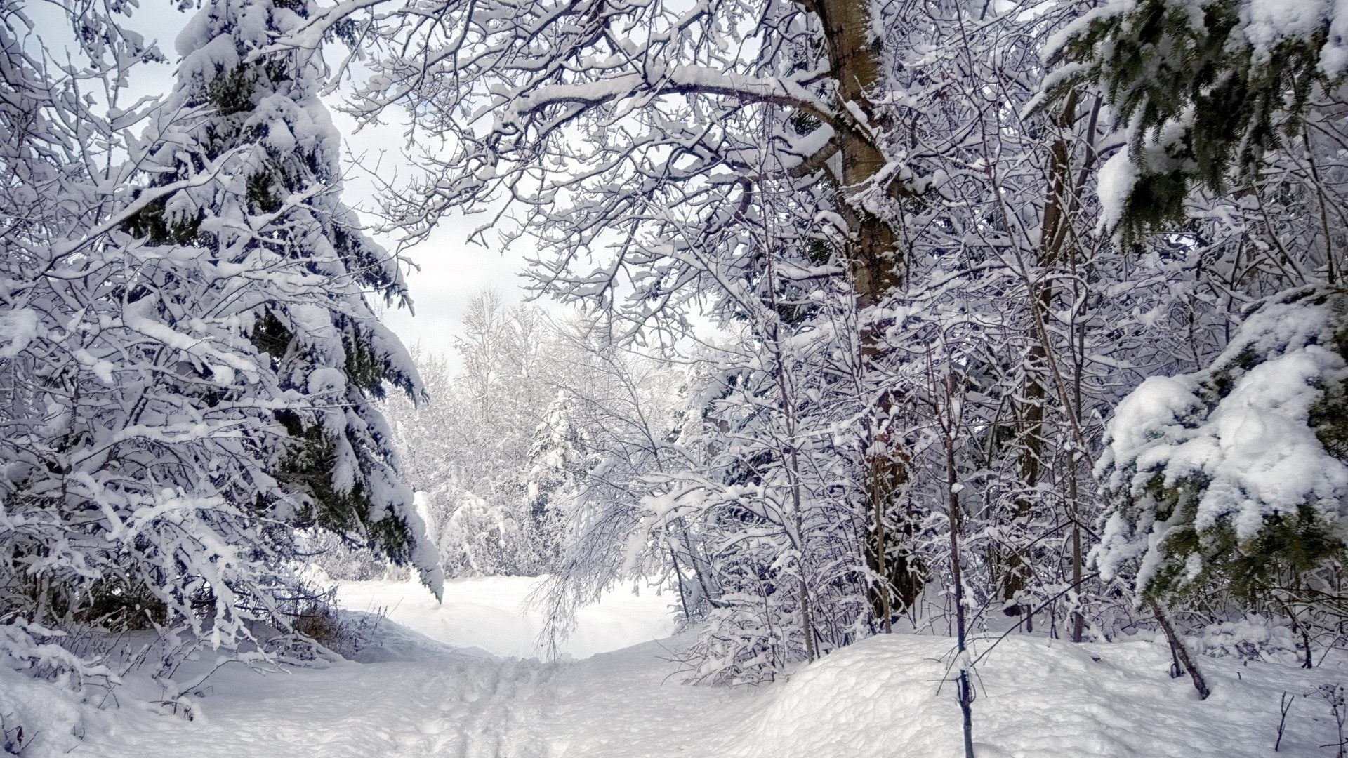 Winter Forest Snow Trees Path Desktop Animated Wallpaper Free