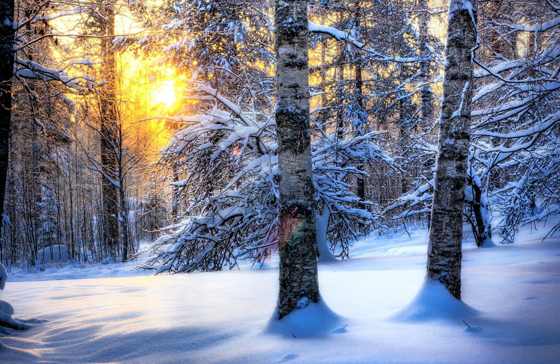 Free winter desktop wallpaper downloads.