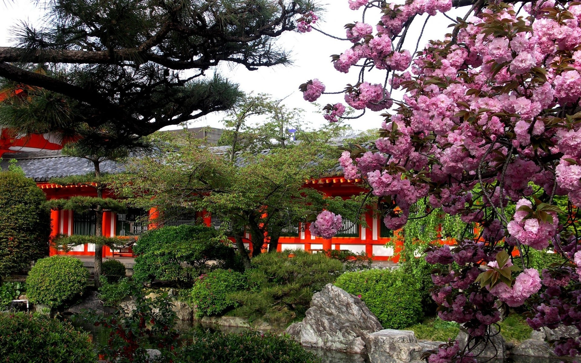 Japanese Spring Pictures