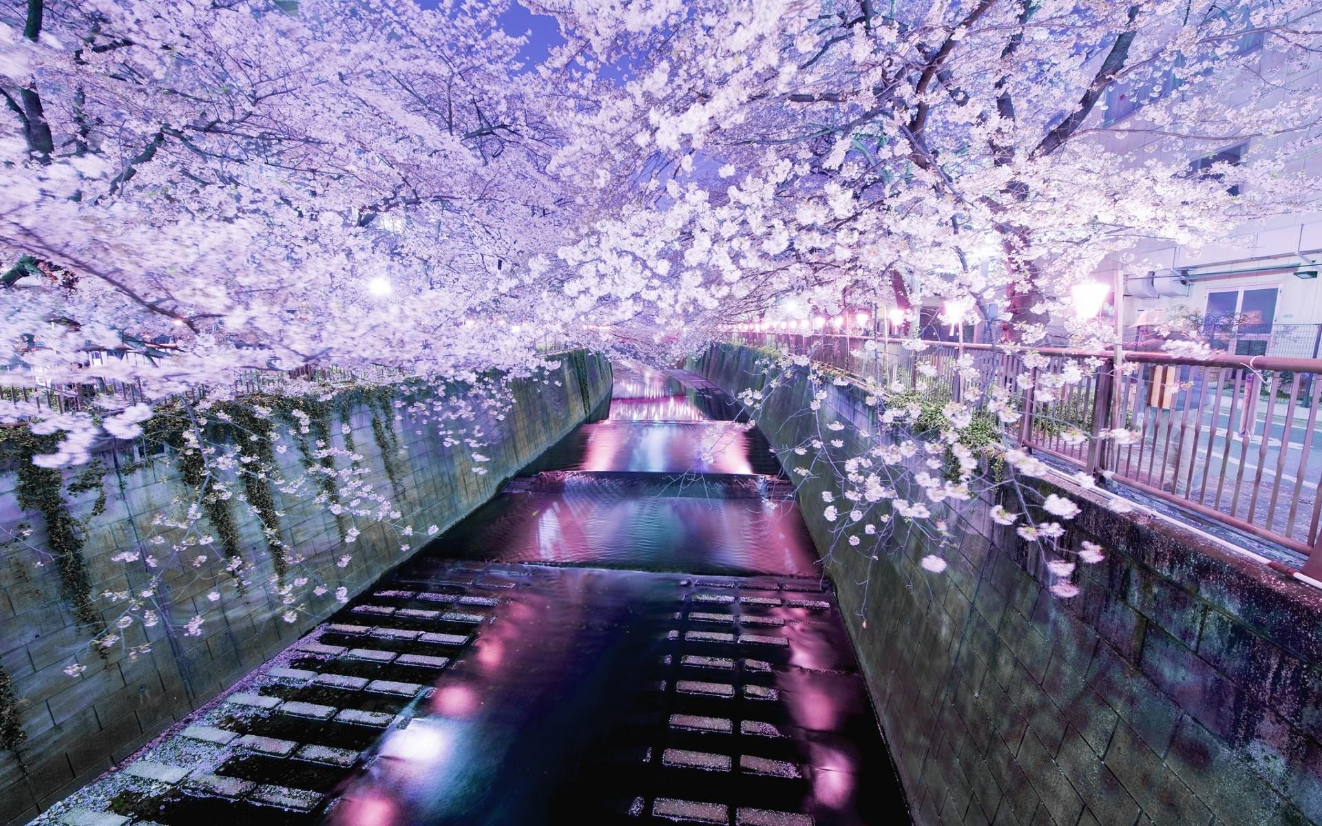 Dreamy & fantasy Flower Nature Wallpaper: Japanese Garden Night .