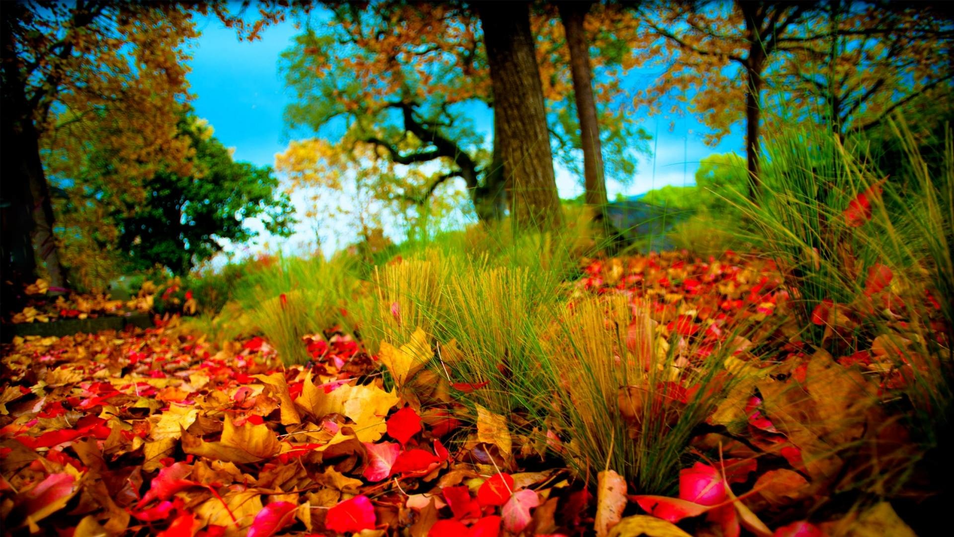 HD Wallpapers 1080p Nature 3D