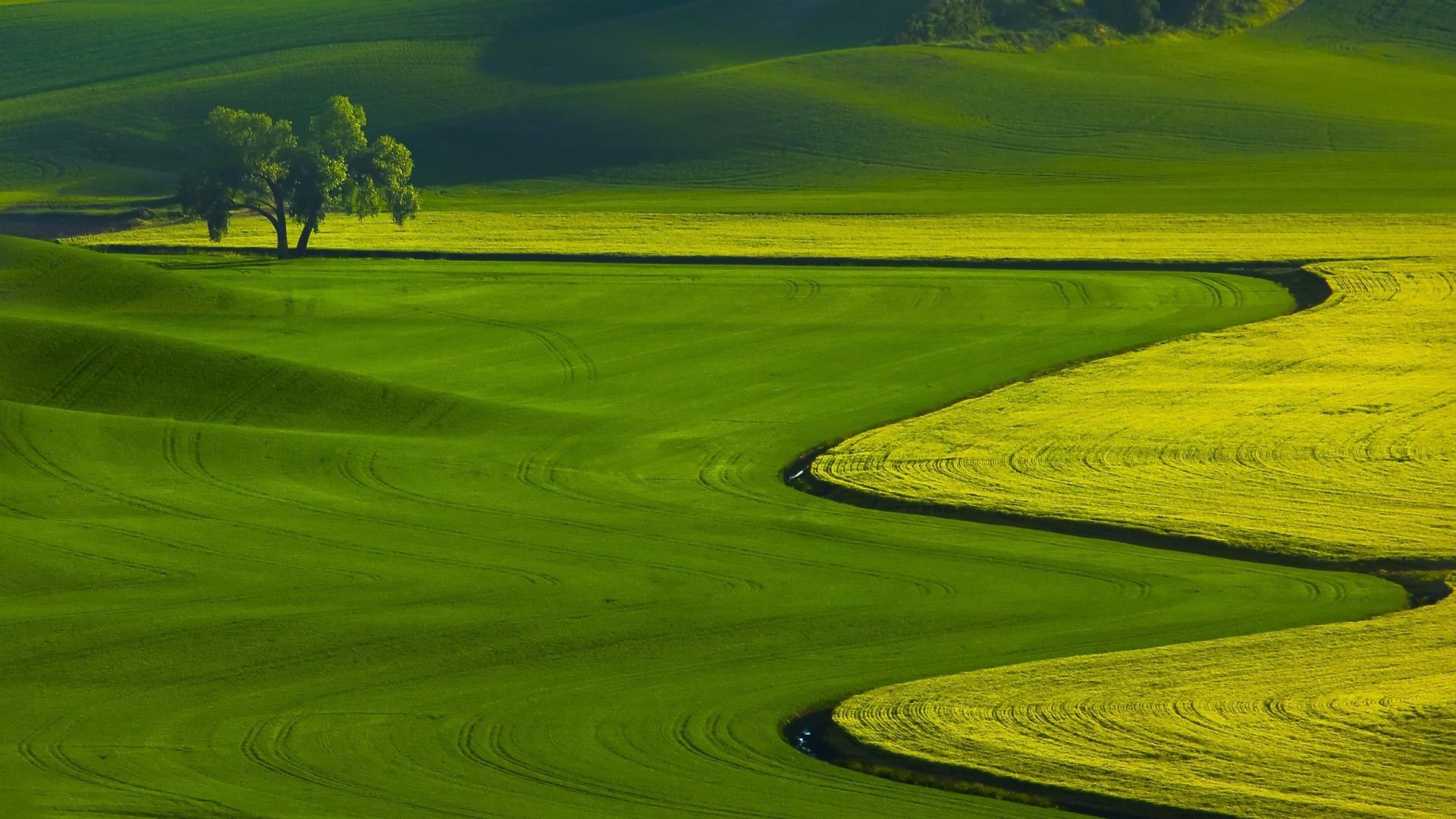 Green Grass Field Wallpaper.