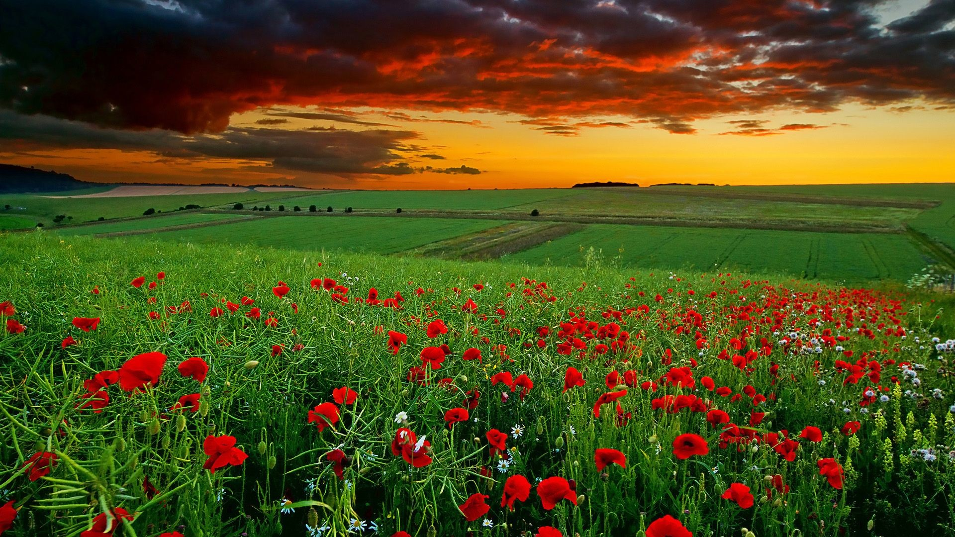 hd wallpapers 1080p widescreen nature free download-4 – HD .