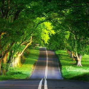 Nature HD Wallpapers 1080p Widescreen