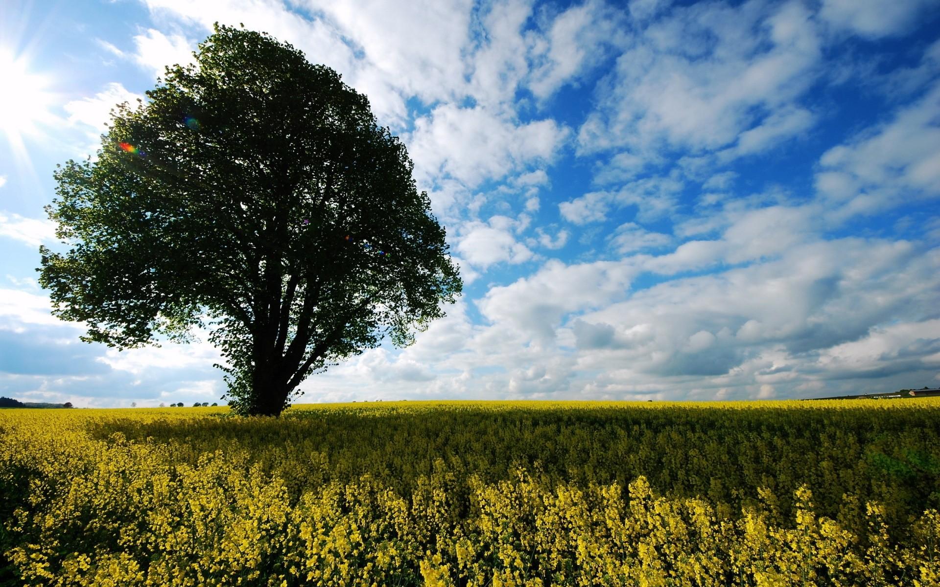 2 Best Wallpaper Hd Nature 2K | Wide Screen Wallpaper 1080p,2K,4K