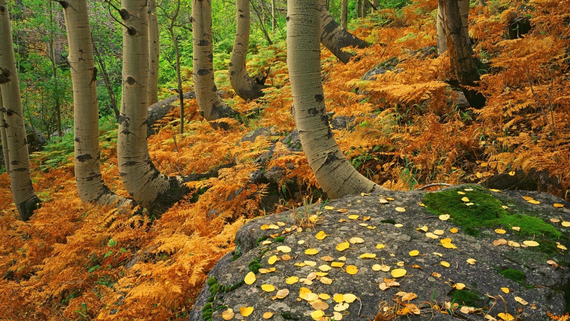 Rocky Tag – Landscapes Rocky Colorado Autumn National Park Ferns Nature Hd  Wallpaper For Android Phone