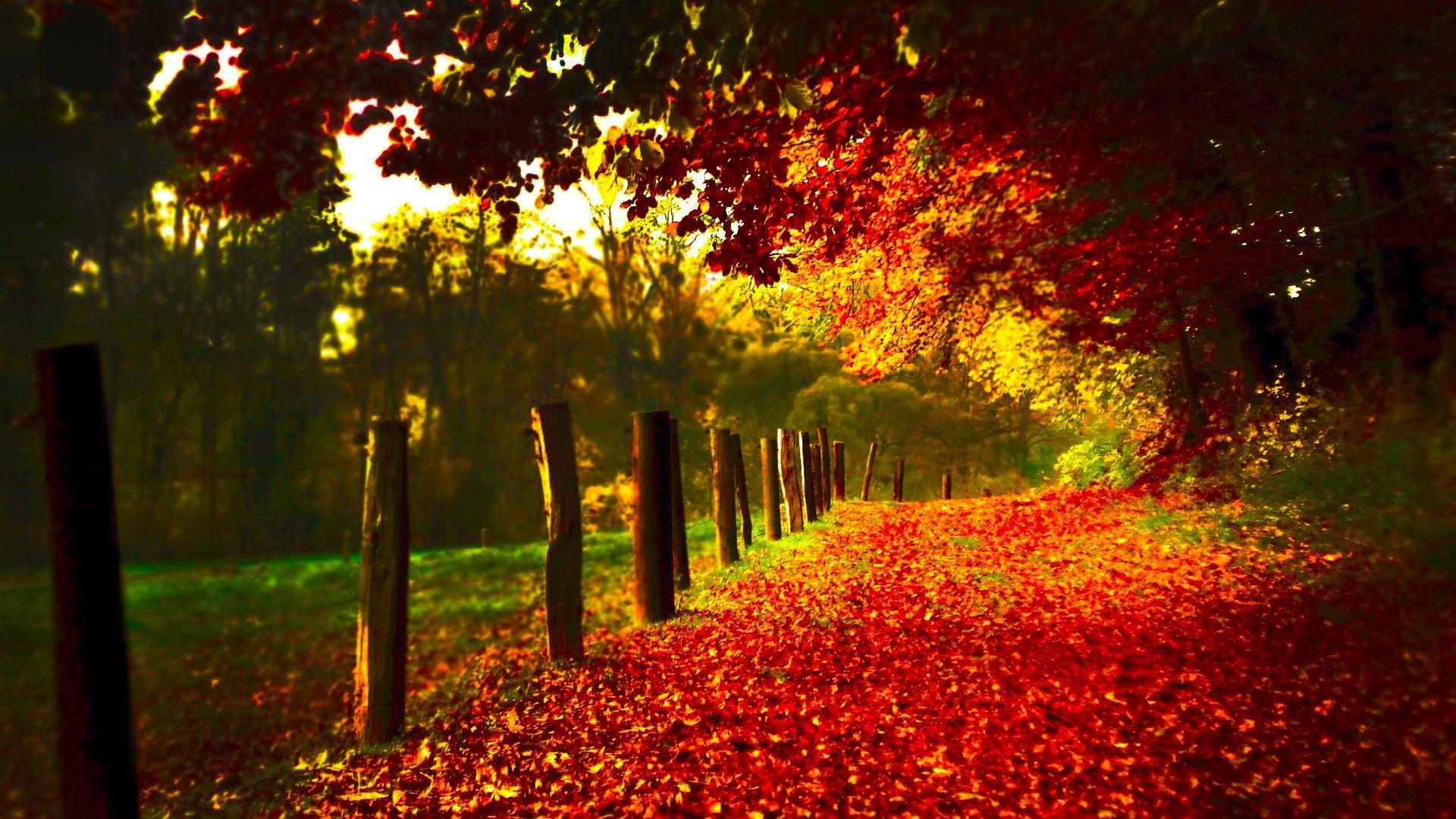Autumn Scenery (id: 23662) – BUZZERG