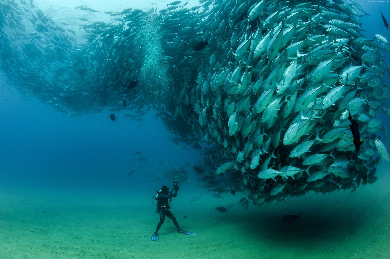 Under Ocean Wallpapers For Iphone As Wallpaper HD