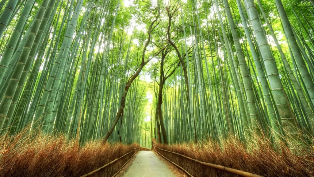 Beautiful Bamboo Forest Japan HD Desktop Wallpaper Background download