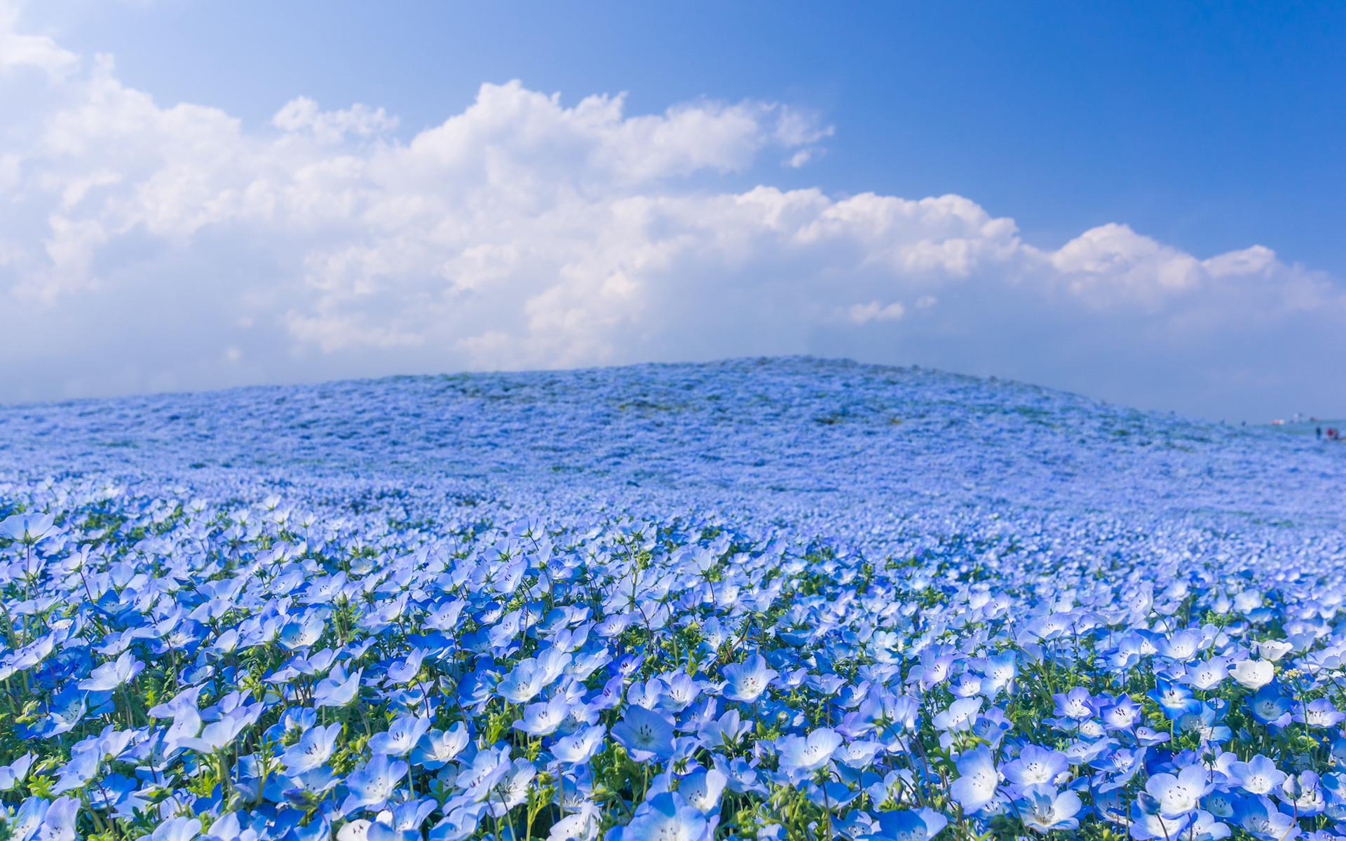 Japan Flowers Desktop Wallpaper 12433