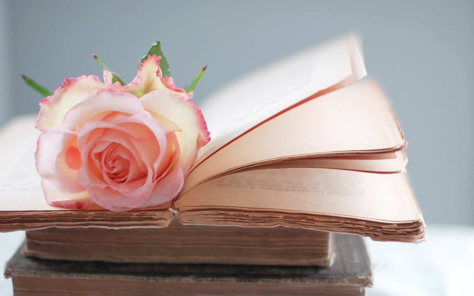 Rose on A Book HD Wallpaper