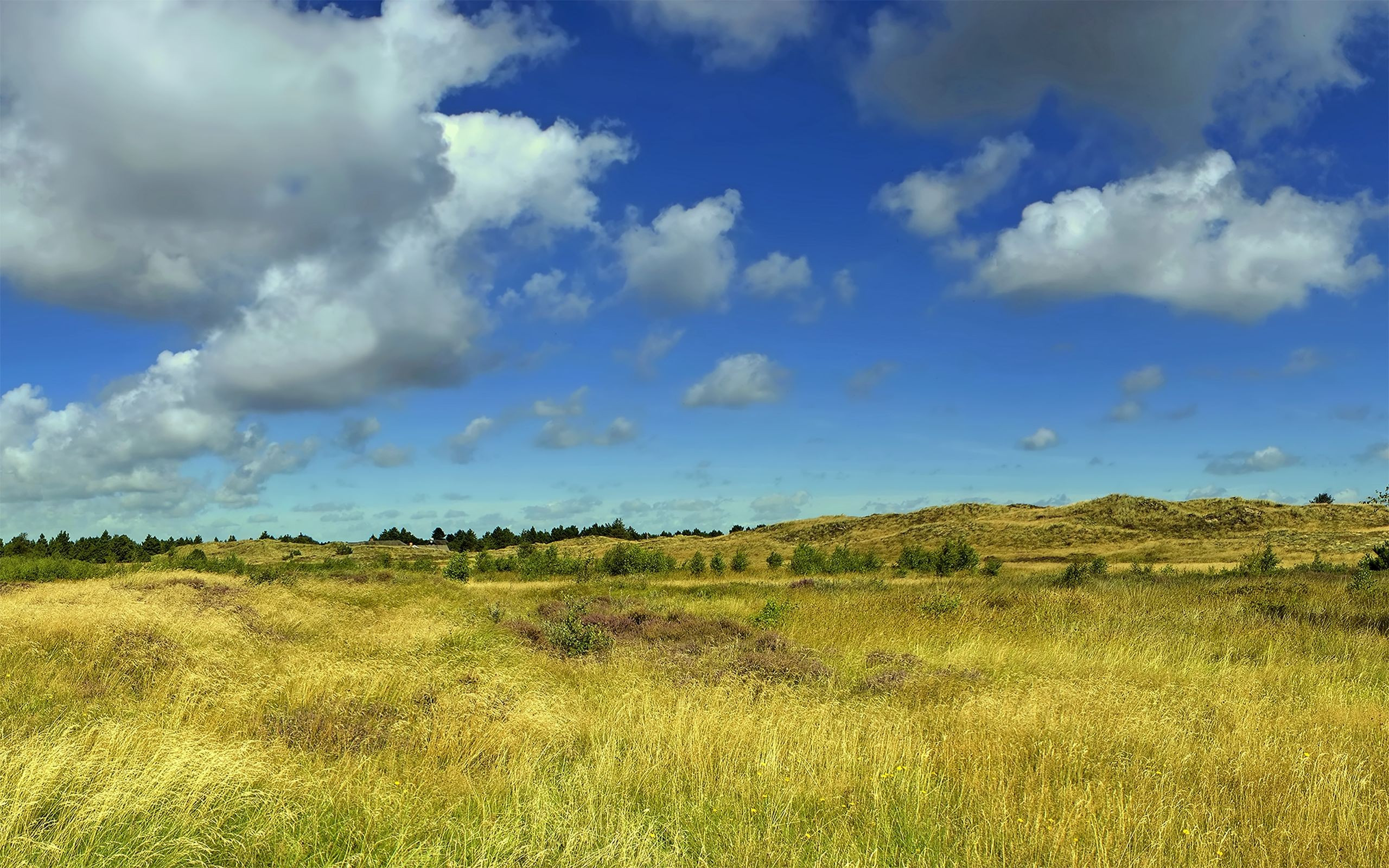 4k Relaxing field and fluffy clouds Wallpaper for desktop and mobile phones.
