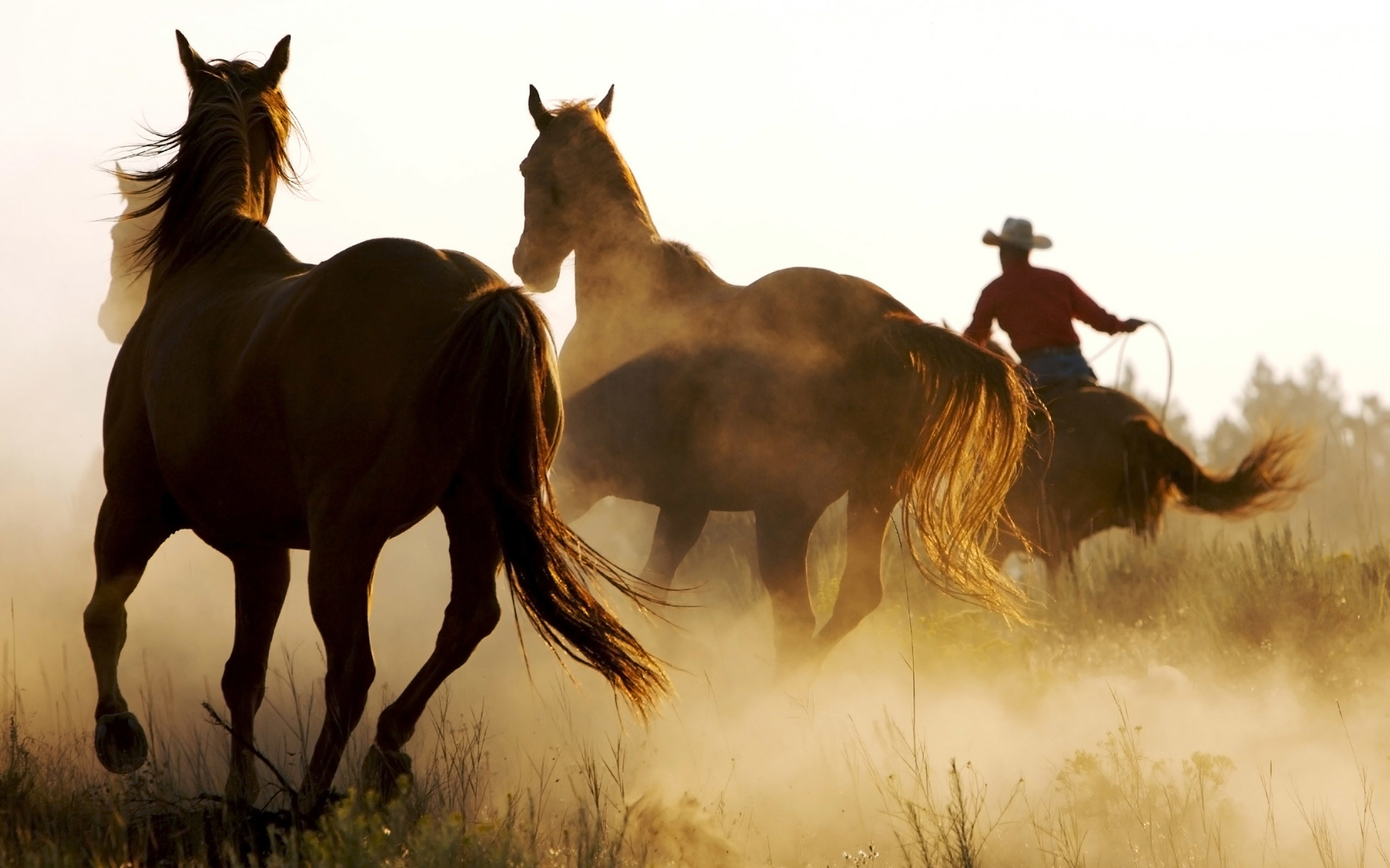 Horse Pictures Only | horse wallpaper horses running free horse wallpaper  horses running .