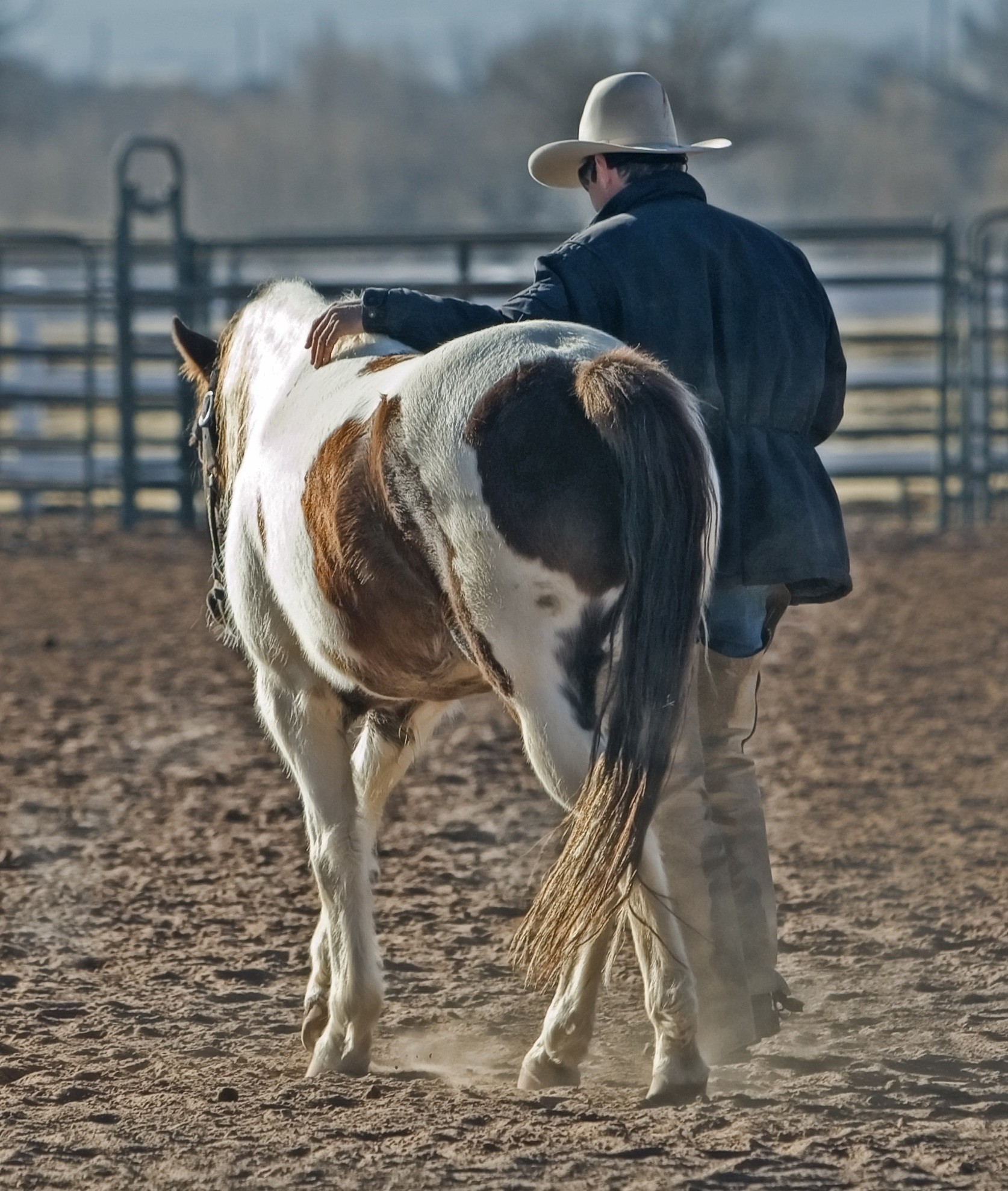 Free stock photo of animal, horse, country, western
