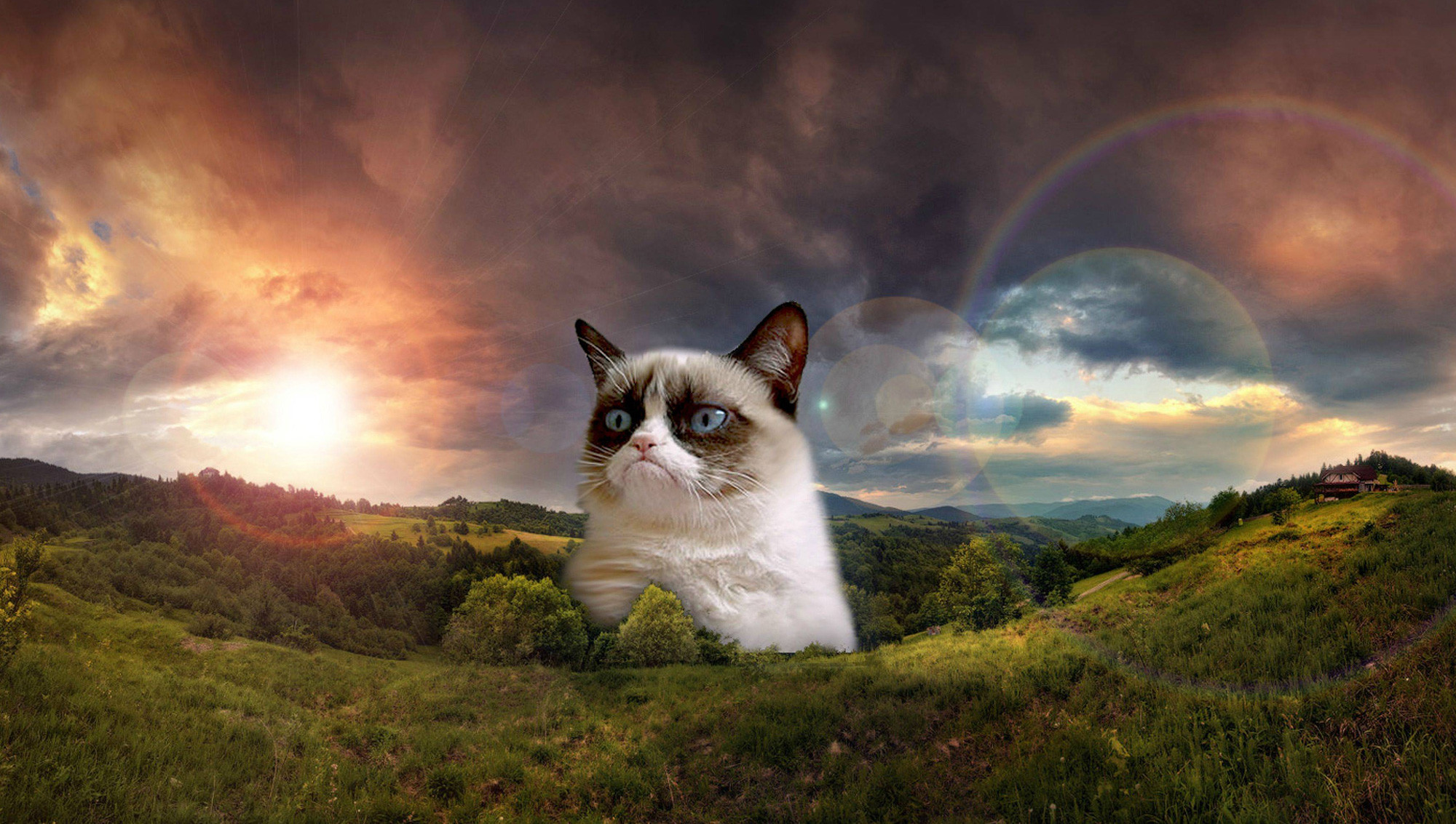 Grumpy Cat Pictures HD Wallpaper 1080p