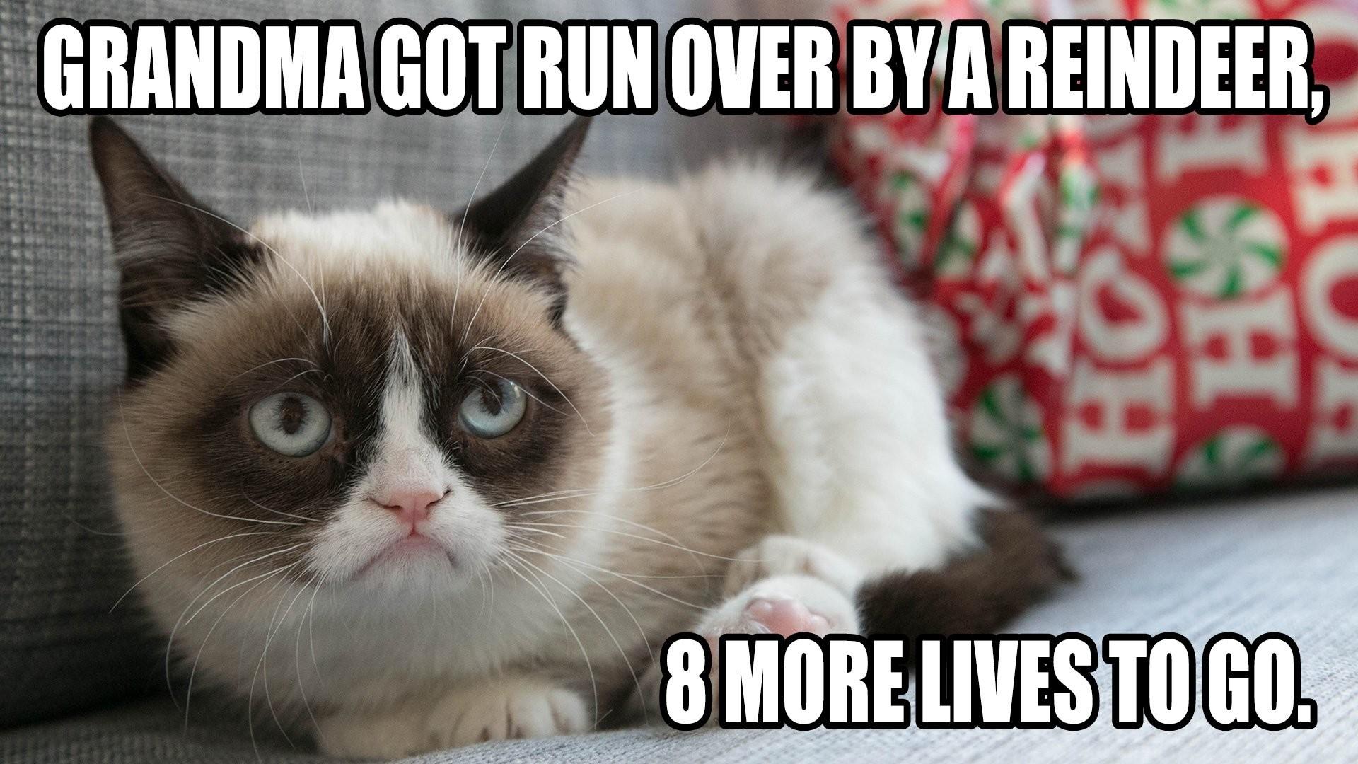 cat meme quote funny humor grumpy (7) wallpaper background