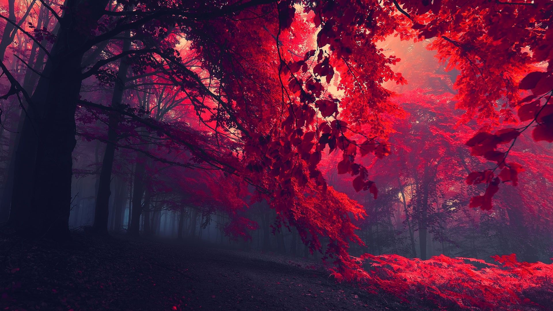 Extreme Nature Wallpapers > FullHDWpp | Full HD Wallpapers 1920×1080