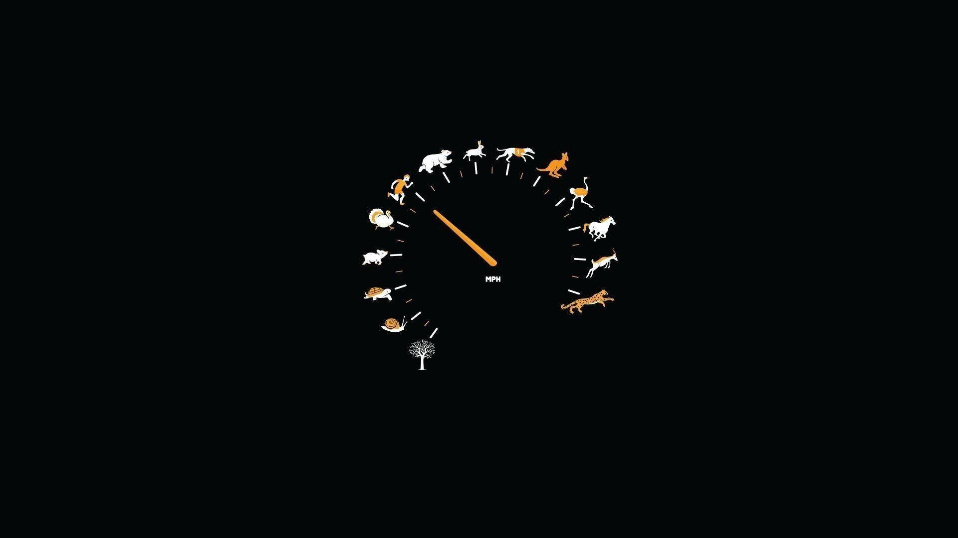 minimalism speedometer animals Wallpaper HD