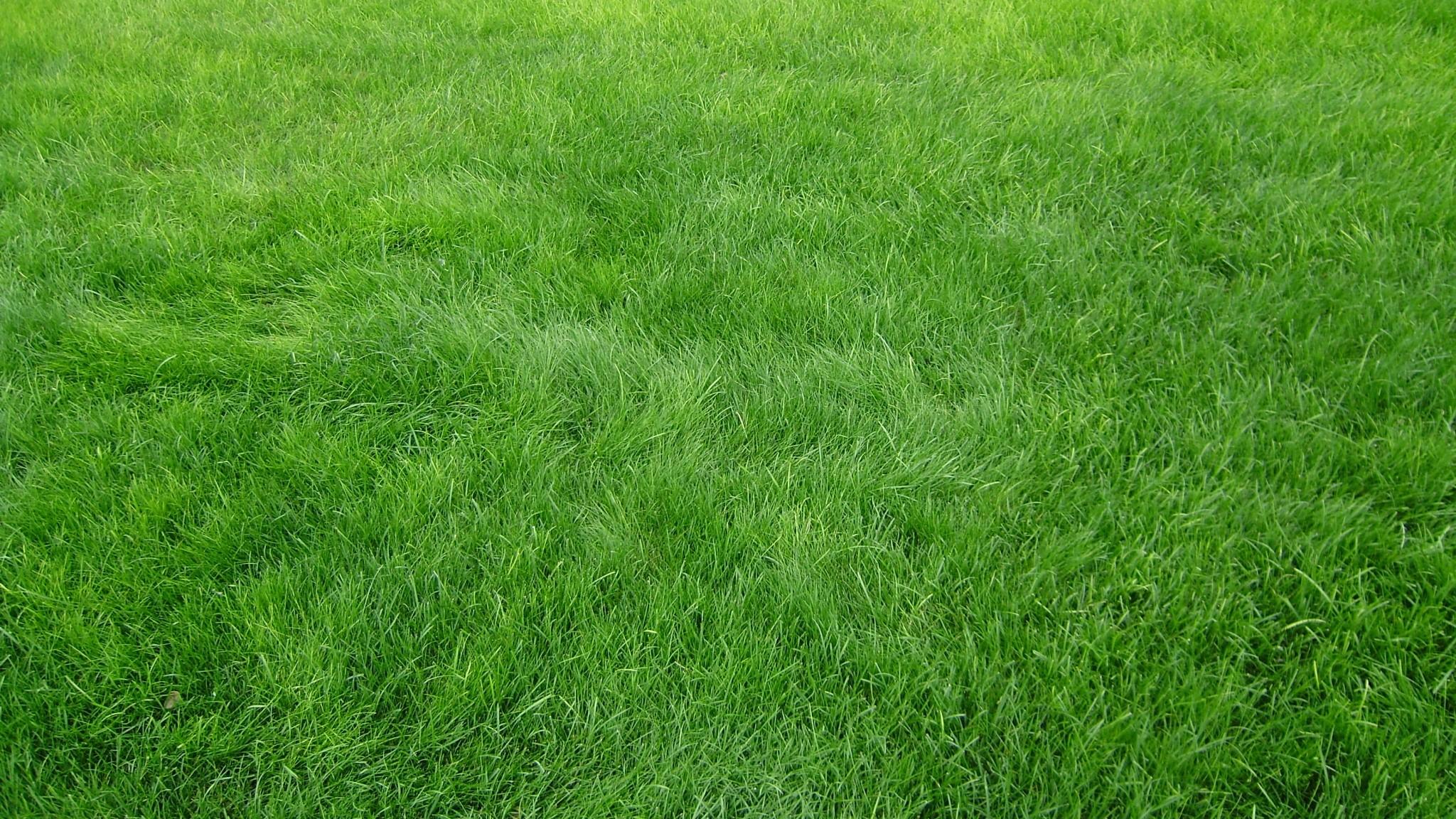 Grass Background HD
