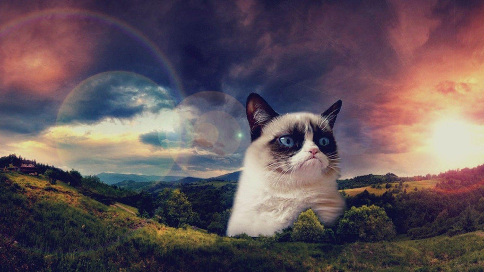 Hipster Cats   Pinterest   Cats, Desktop .