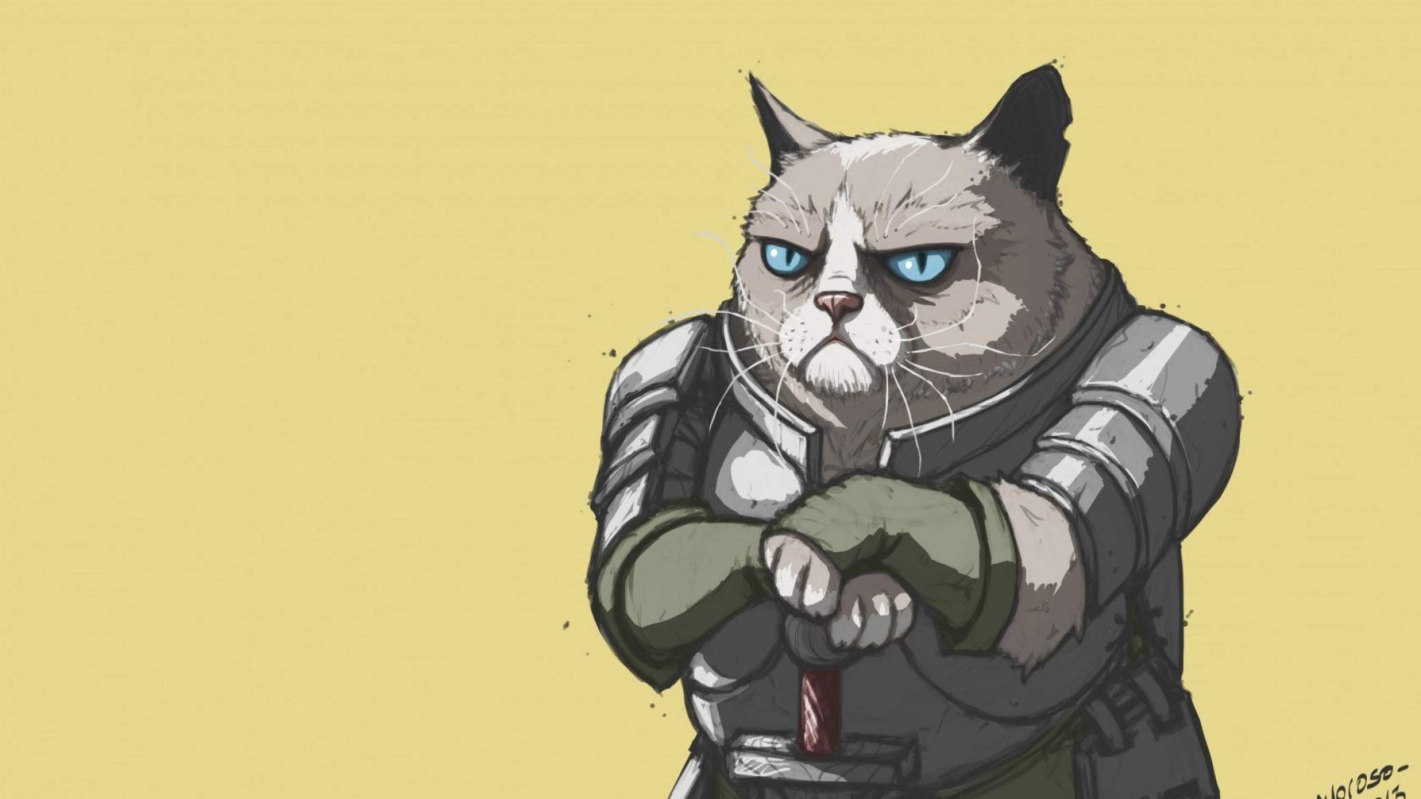 Preview wallpaper grumpy cat, armor, meme, popular 2048×1152