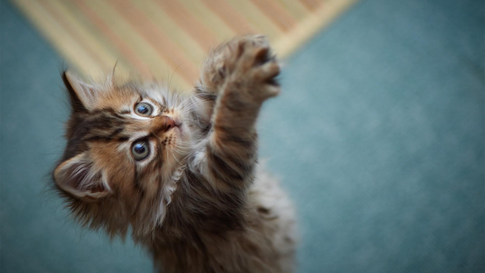 Wallpaper kitten, game, paws, fur, furry