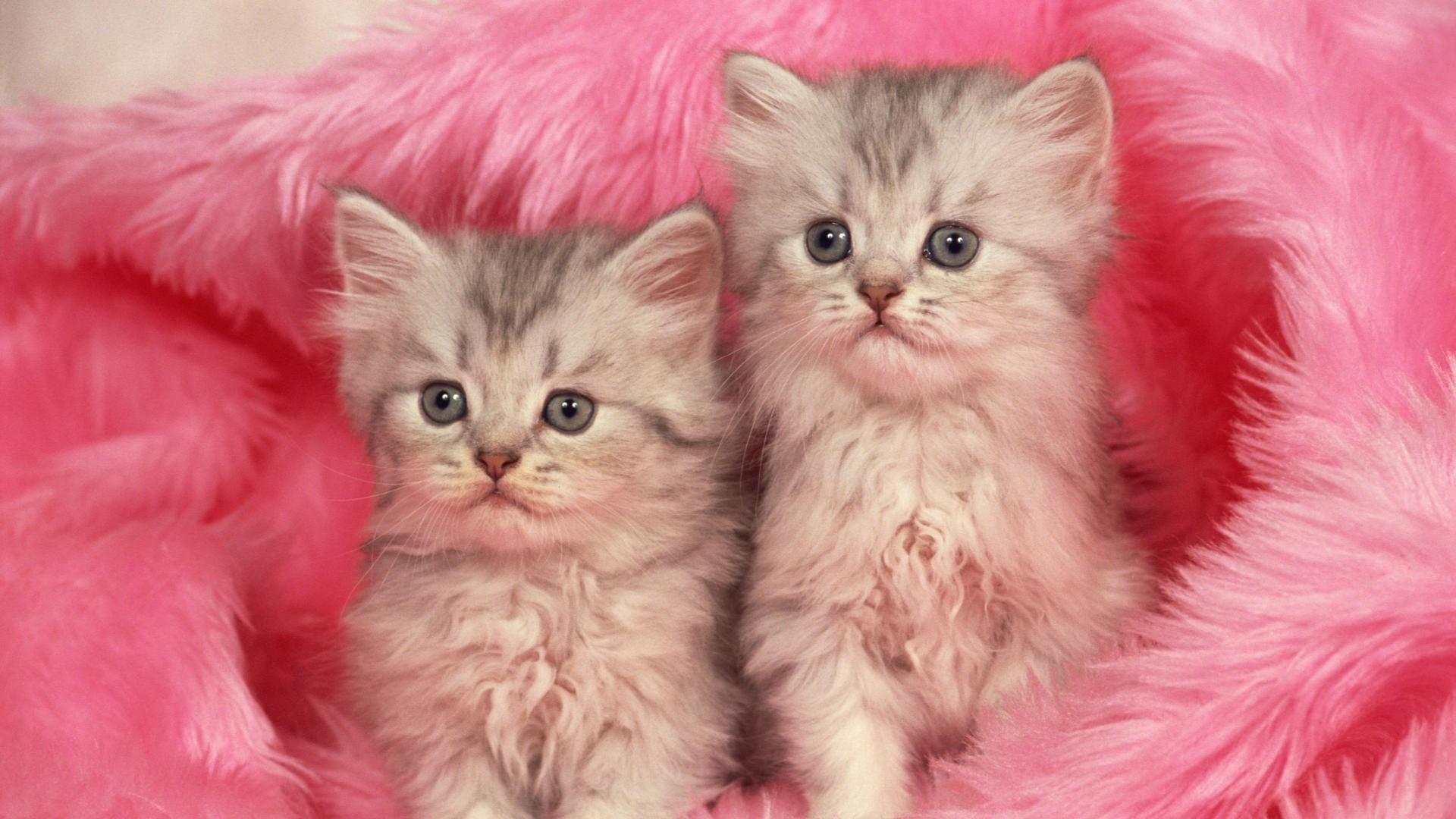 Wallpaper kittens, couple, fur, furry