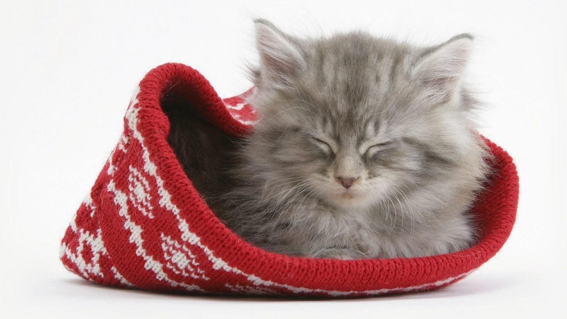 Wallpaper cat, hat, sleeping, furry