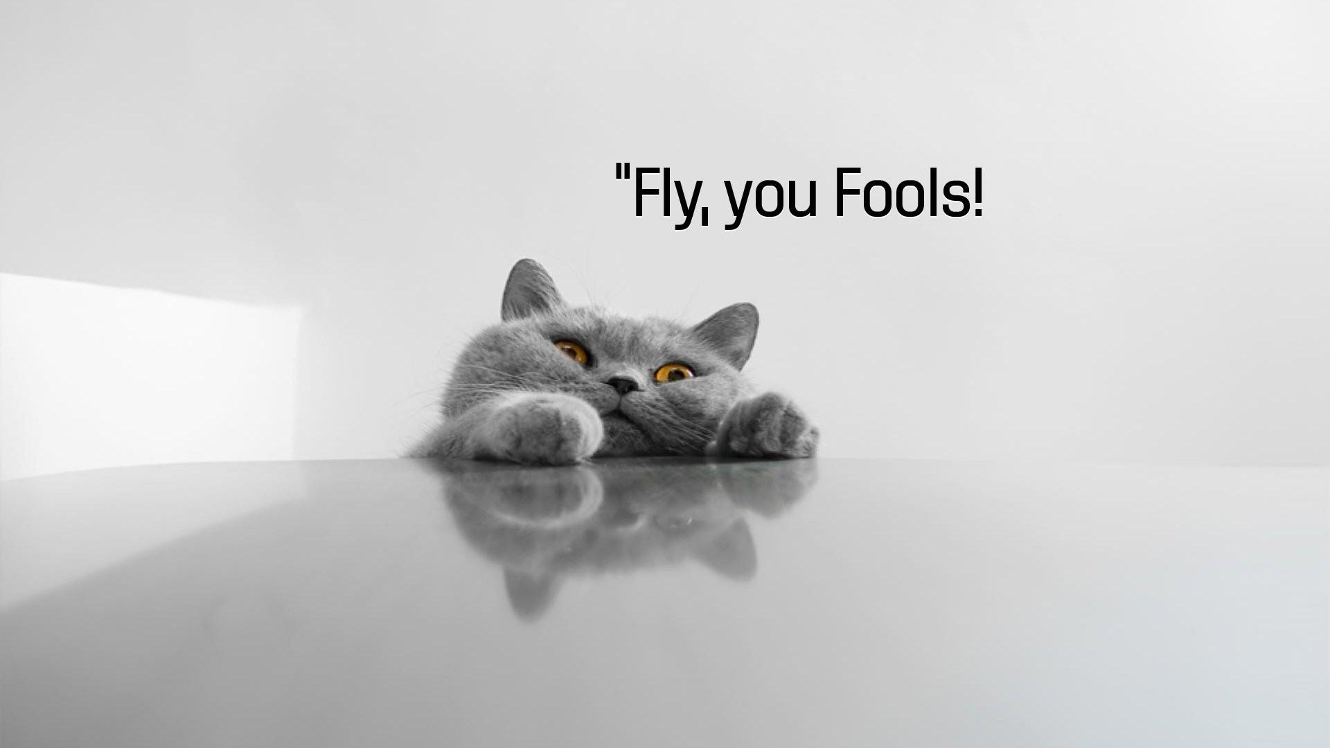Cat meme quote funny humor grumpy (125) wallpaper | | 355217 .