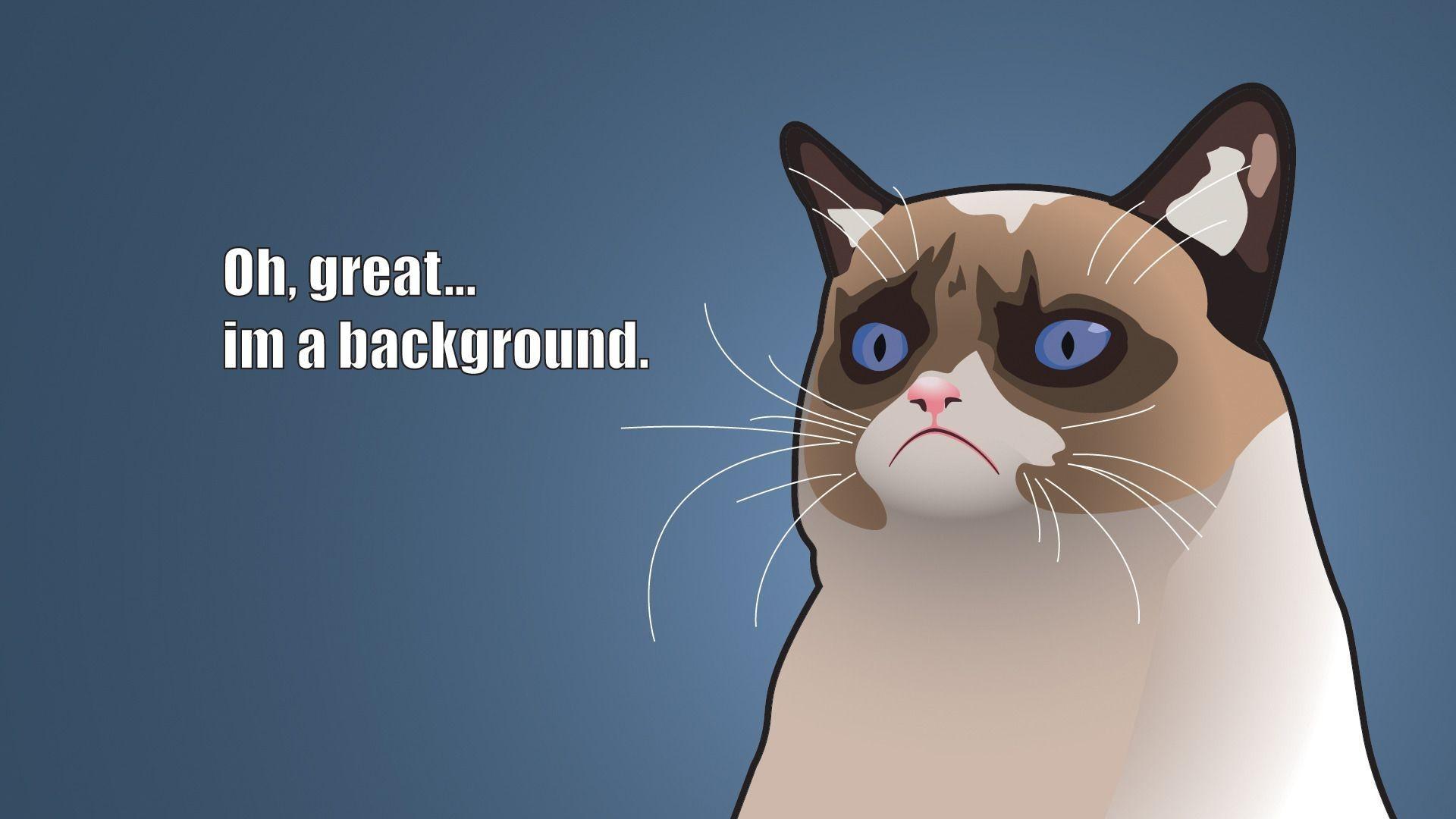 Angry Cat Funny Meme Wallpaper HD