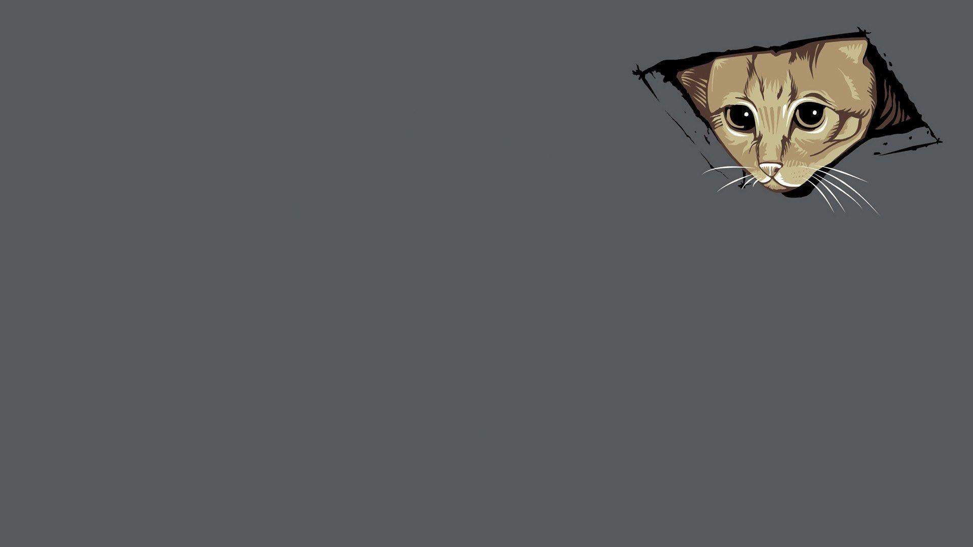 ceiling cat meme wallpaper 4575