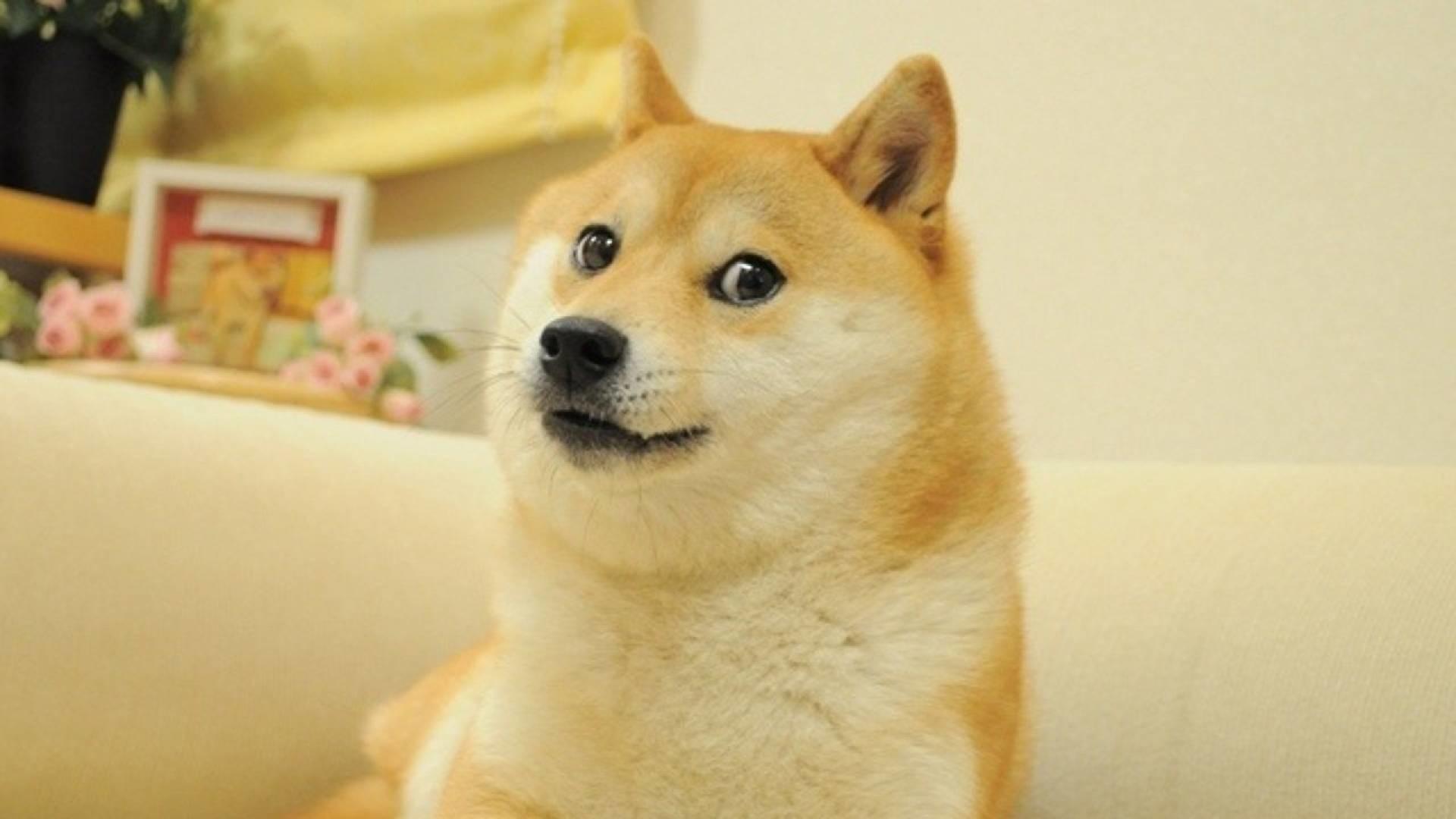 Doge meme hd – photo#1