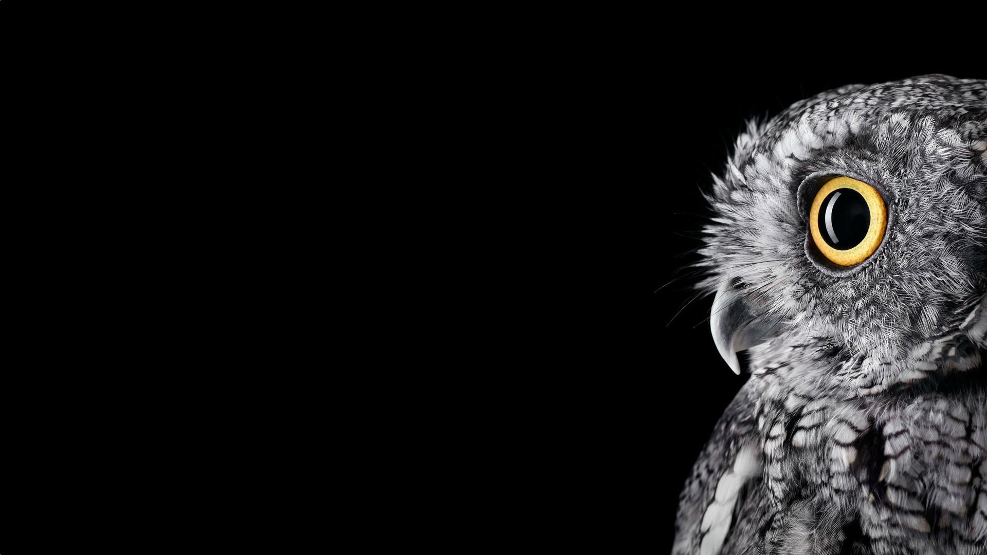 Photographer Brad Wilson – Owls from the World Bird Sanctuary in St ..