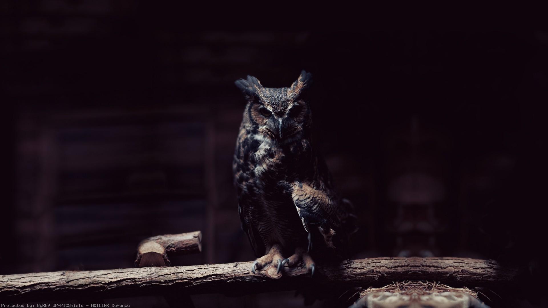 Dark-owl-HD-wallpaper-wp3804373