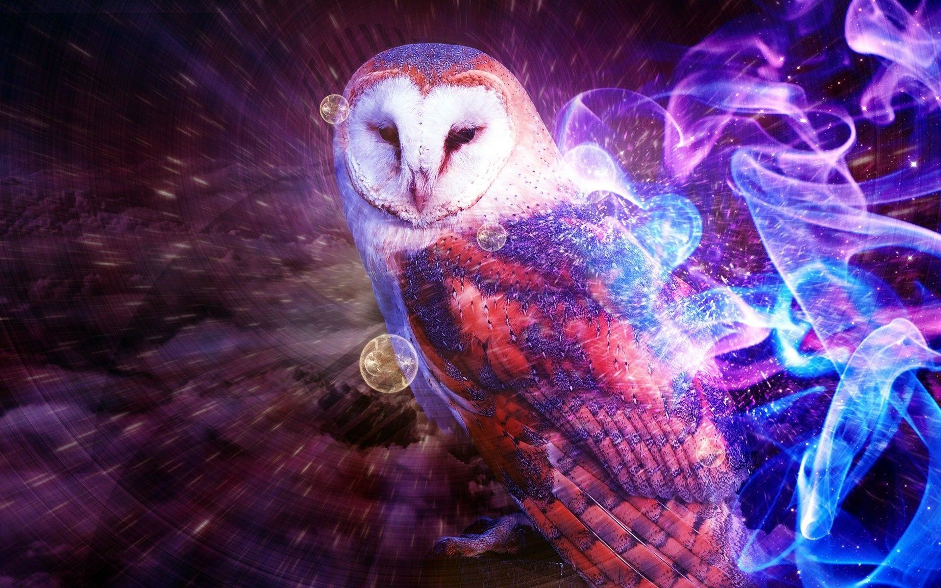 Cartoon Owl Wallpaper – WallpaperSafari