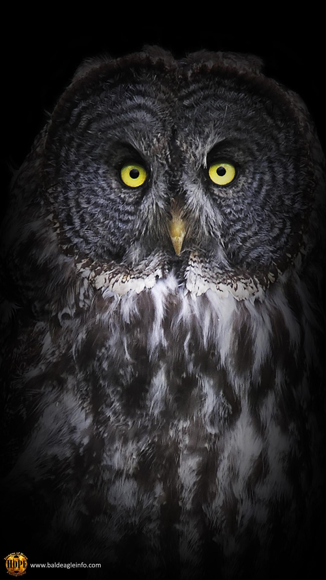 <b>Owl</b> – Apple/<b>iPhone<