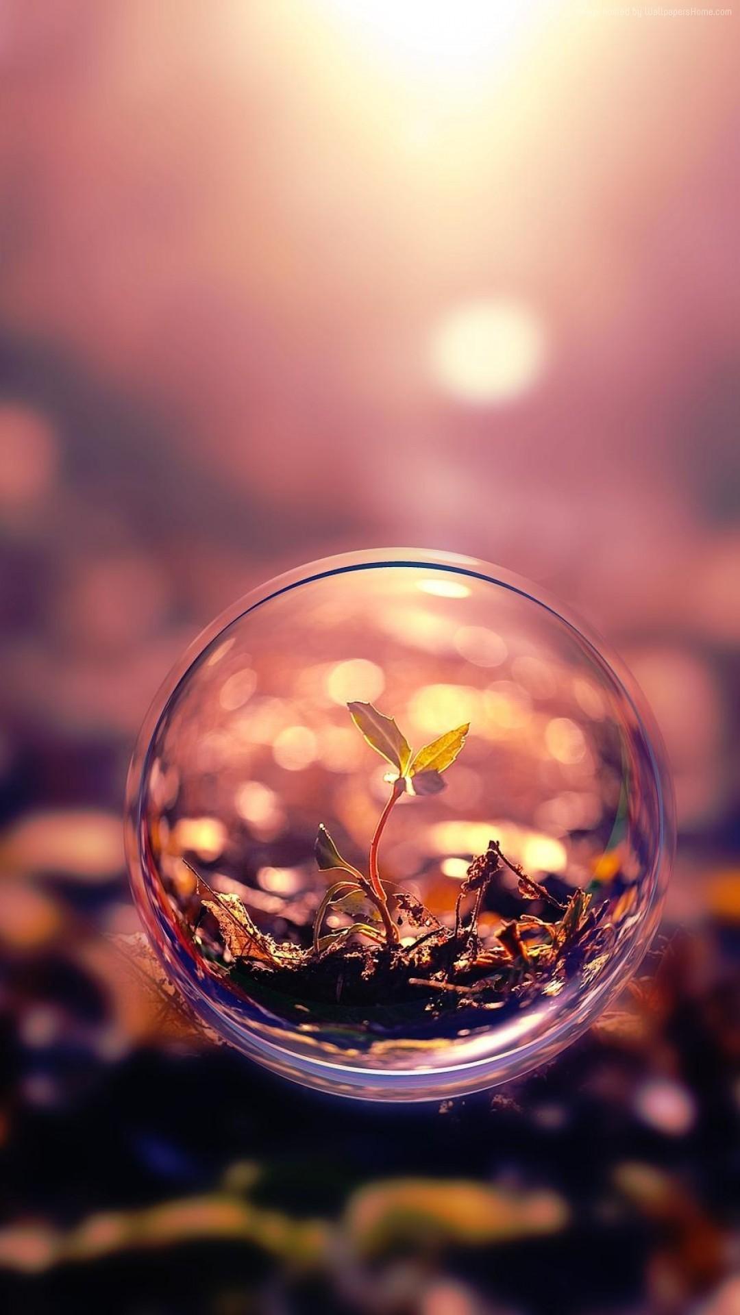 sfera wallpaper iPhone 7 sphere 4k hd wallpaper background sunset  transparent plant