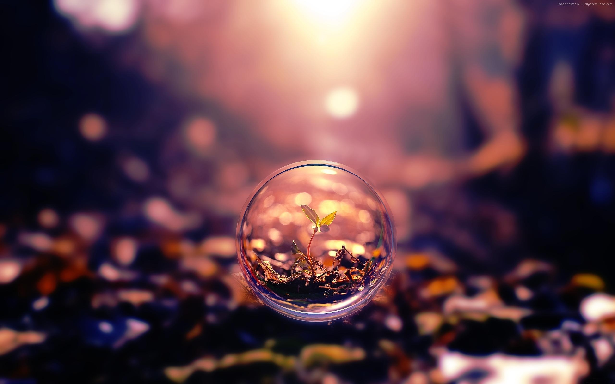 Wallpaper sphere, 4k, HD wallpaper, background, sunset, transparent, plant,  OS #245. Bring some HD wallpapers into your life with WallpapersHome!