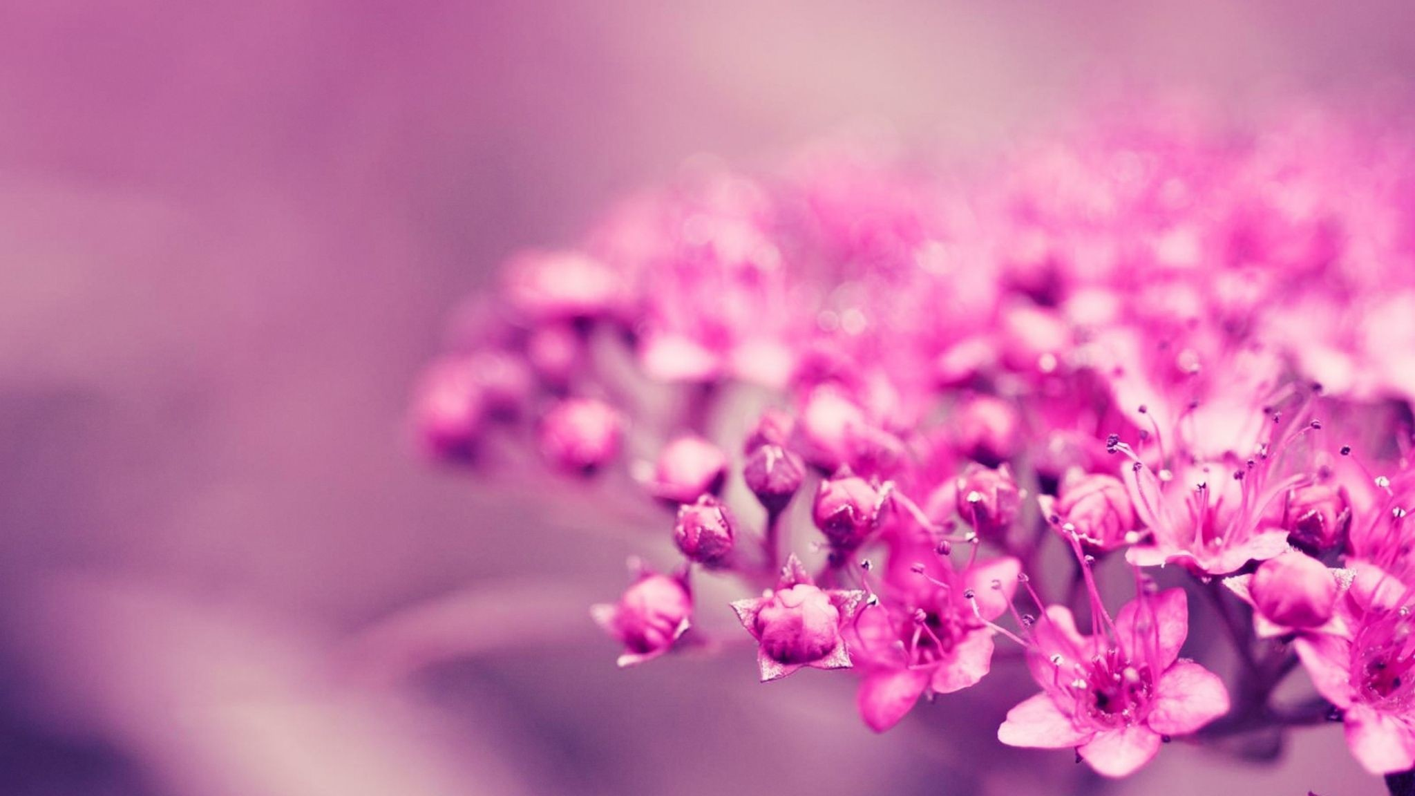 … free adorable flowery wallpaper …