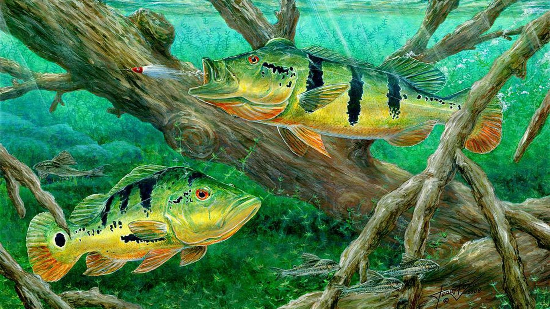 bass-fishing-wallpapers-hd-9