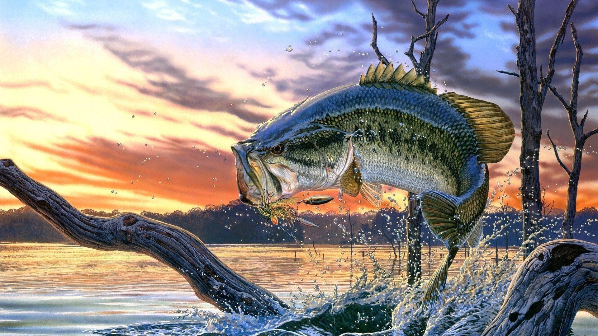 Wallpaper of largemouth bass Stock Free Images