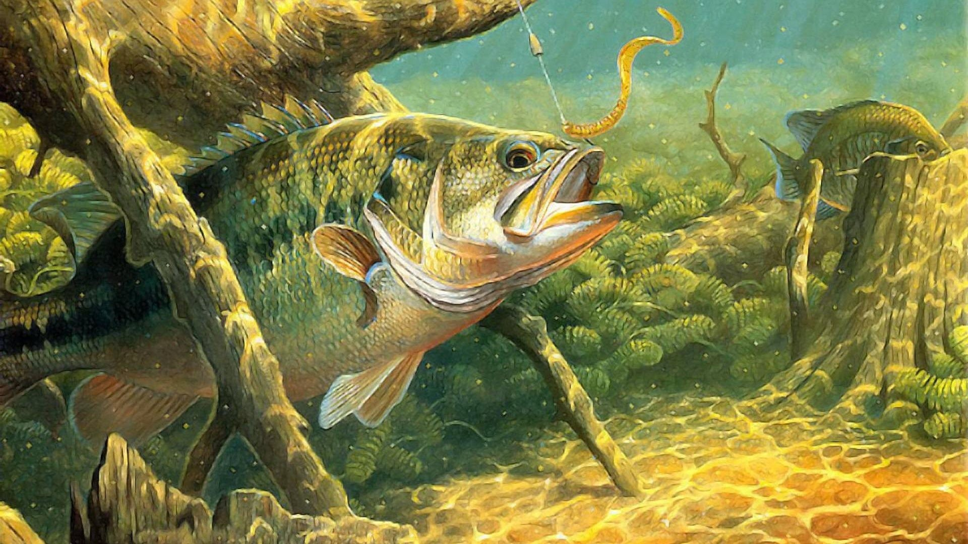 Bass Tag – Sport Lake Underwater River Water Bass Fish Fishes Fishing  Artwork Wallpapers Free Download