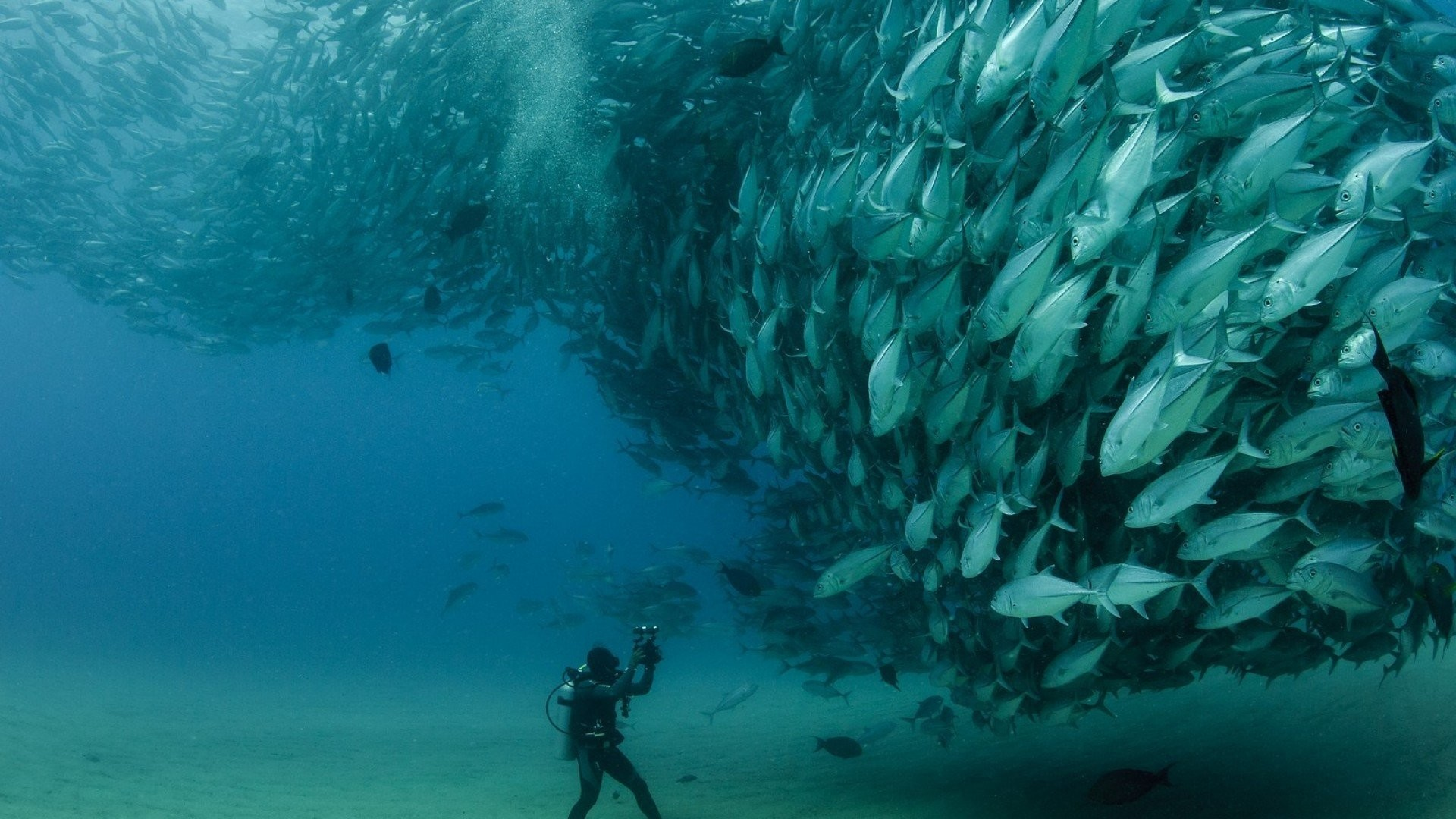 Bass Fishing Wallpapers HD 1920×1080