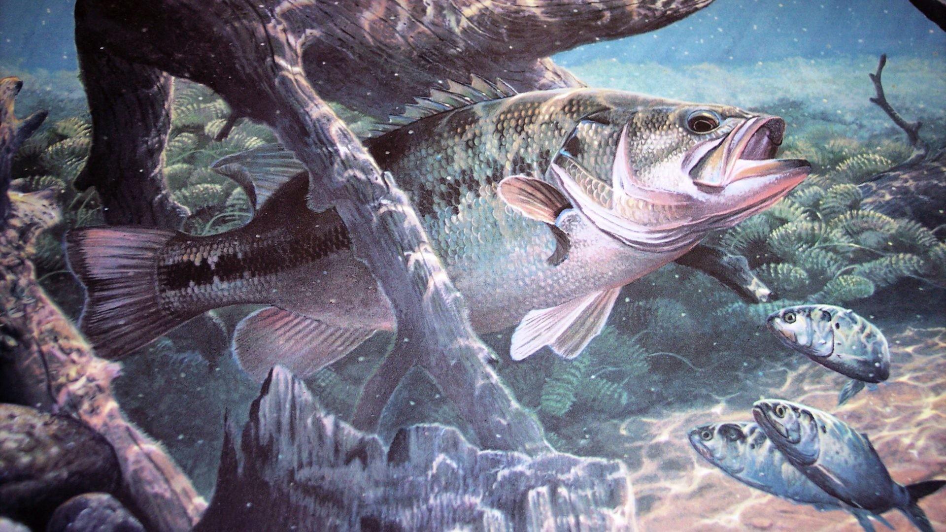 Underwater Tag – Fishes Bass Underwater Lake Water Artwork Sport Fishing  Fish River Stock Photo Free