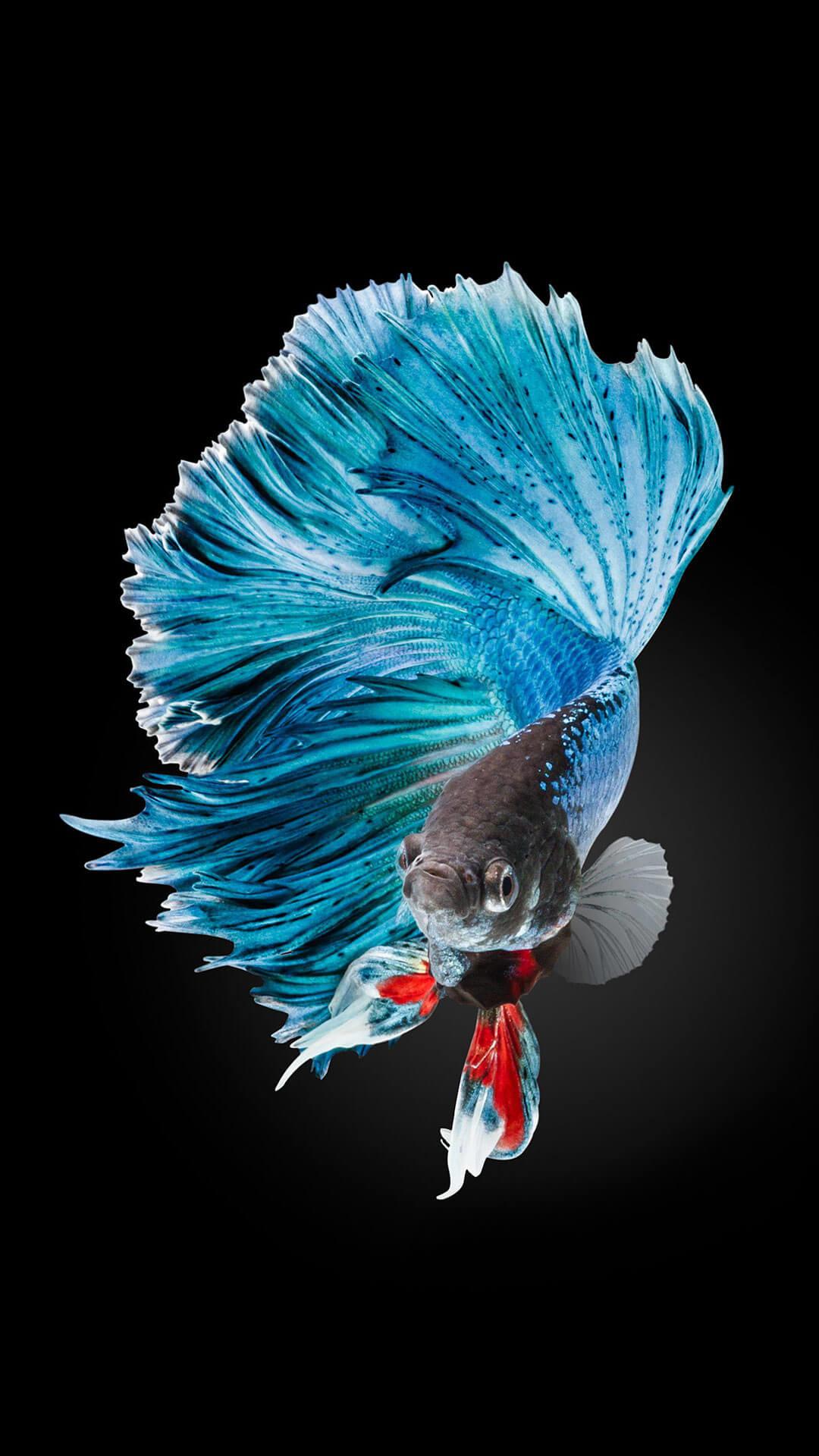 Full HD p Fish Wallpapers HD Desktop Backgrounds x | HD Wallpapers |  Pinterest | Fish wallpaper, Wallpaper and Wallpaper backgrounds