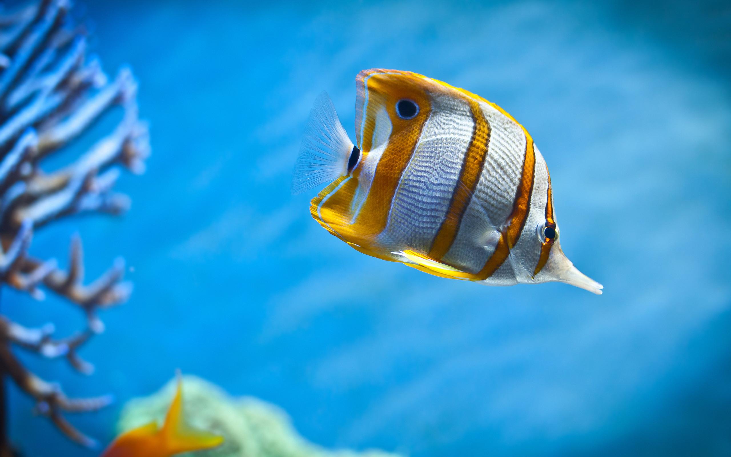 Moon jellyfish 4K Ultra HD Wallpaper | Aquarium Fish Wallpapers Pictures  Photos Images