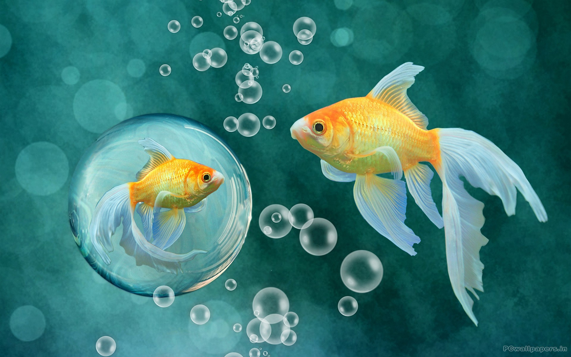 Fish Wallpaper, Top 35 Fish Wallpapers Original 4K Ultra HD .