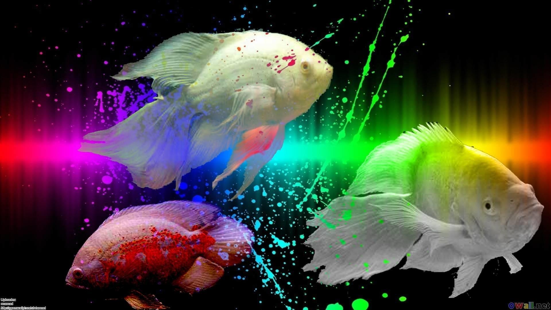 … hd wallpapers pulse; fish wallpapers wallpapersafari …